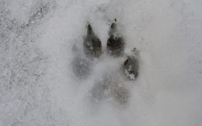 Sel de déneigement et neige : Attention danger !