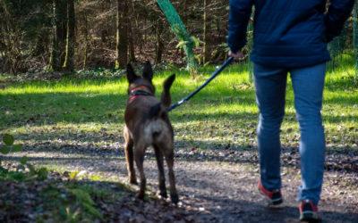 Du 1er avril au 15 juillet, les chiens doivent être tenus en laisse dans les forêts.